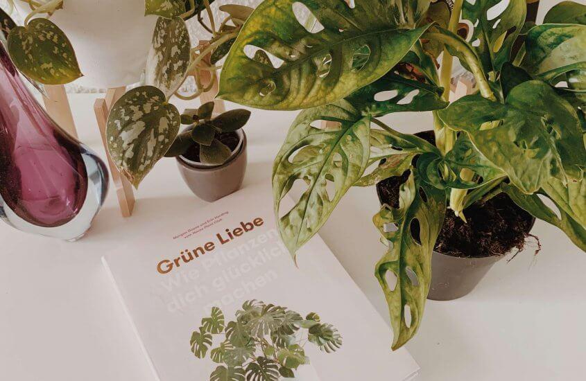 Grüne Liebe – Wie Pflanzen glücklich machen